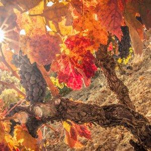Apartamentos turísticos en Haro, La Rioja - Wine & Soul Suites